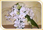retombant avec de l'orchidée Phalenopis