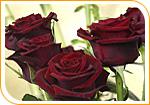 Le bouquet de roses