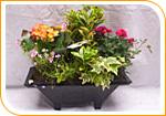 Jardinière de plantes