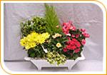 Jardinière de plantes 50 cm